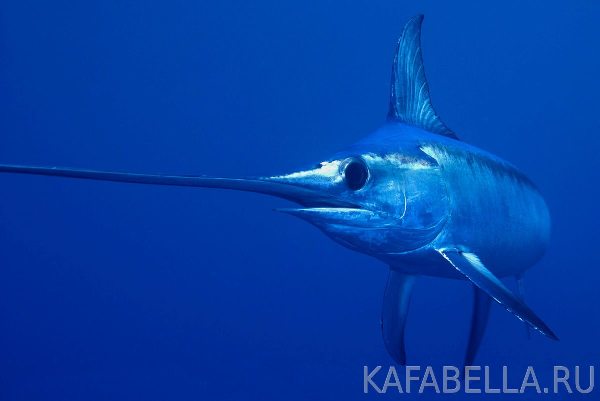 sword-fish_tours_slider_about